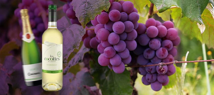 Banner wino bezalkoholowe